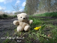 Teddy am Oder-Havel-Kanal