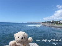 Teddy in Gran Canaria